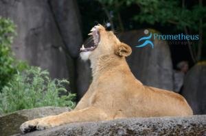 tratamiento de la disfunción temporomandibular